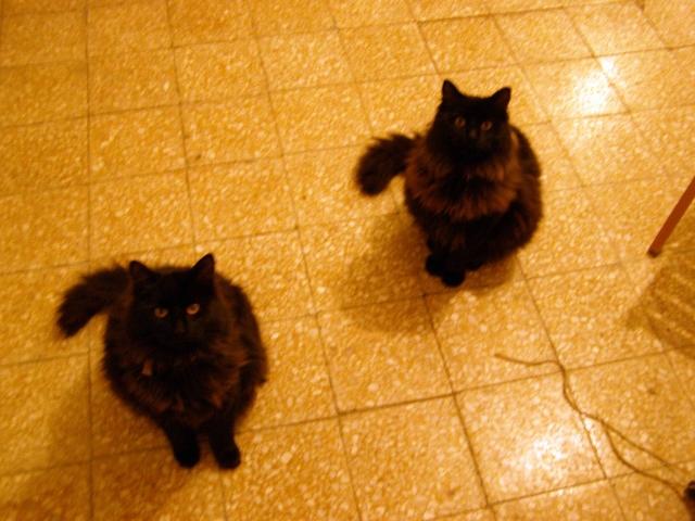 Ο Χοντρός και ο Τσίλι