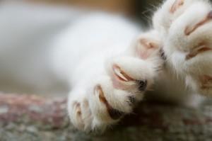 Πέλμα γάτας
