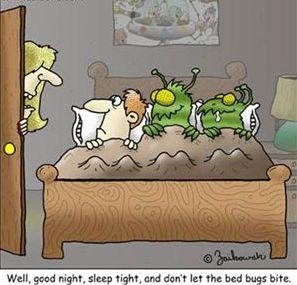 Bedbug by Brian Zaikowski